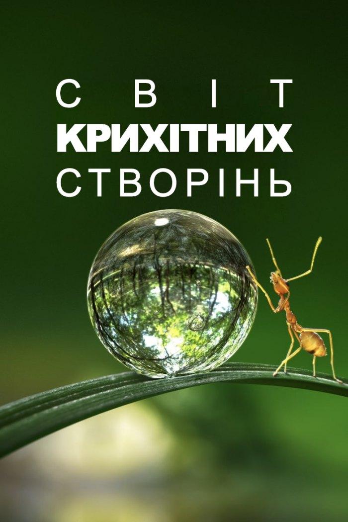 Світ крихітних створінь / Маленький світ
